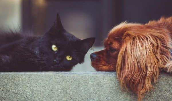 Dog And Cat Door Pet Way