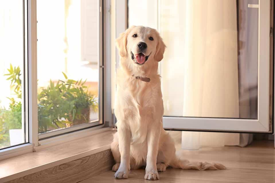 Cute Dog Near A Window Open With Insect Mesh